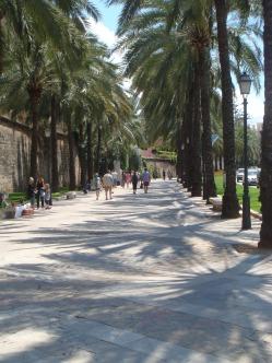 Palma 2013 017