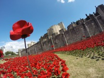 Tower of London Poppies2