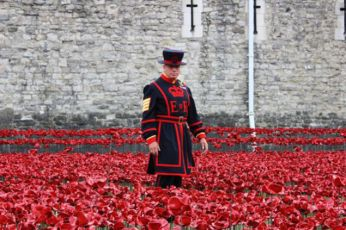 Tower of London Poppies3