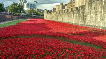 Tower of London Poppies7