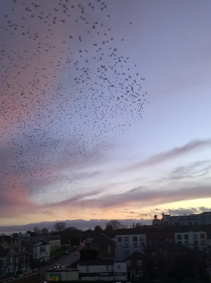Birds Over Norwich 1