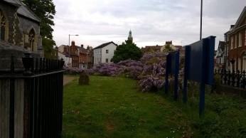 St Giles Church Wisteria 2
